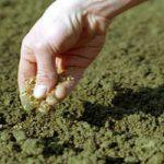 Готовим почву к посеву